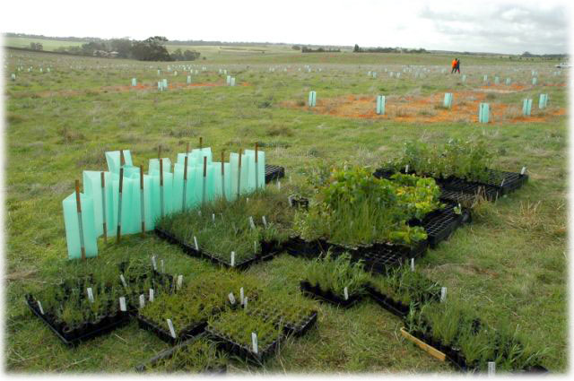 Million Trees Program in South Australia