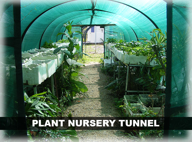 coffs community garden plant nursery