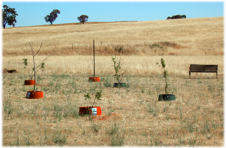 Plant food orchard Flinders Ranges