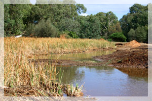 Stables Revegetation a Community Effort