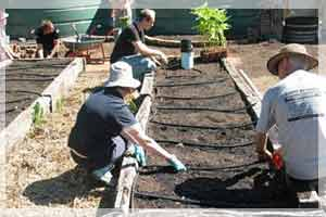 Sustainable Gardening Made Easy Free Workshops