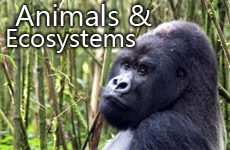ANIMALS AND ECOSYSTEMS